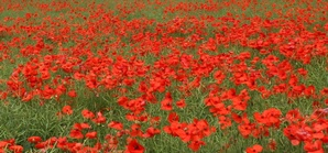 Marlow Remembers World War 1
